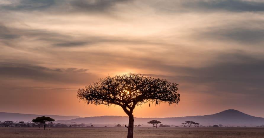 Verkkopelaamisen nykytilanne Afrikassa